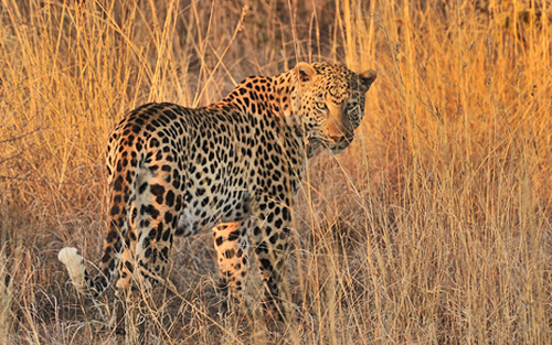 Pilanesberg Private Lodge Big 5 Pilanesberg Game Reserve Safari Accommodation Bookings South Africa