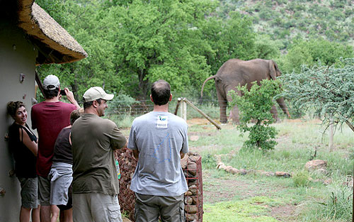 Elephant Sighting Pilanesberg Private Lodge Pilanesberg Game Reserve Accommodation Bookings