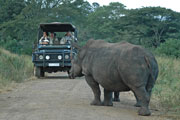 Big 5 Sighting Game Drives African Safari Pilanesberg Game Reserve Game Park South Africa